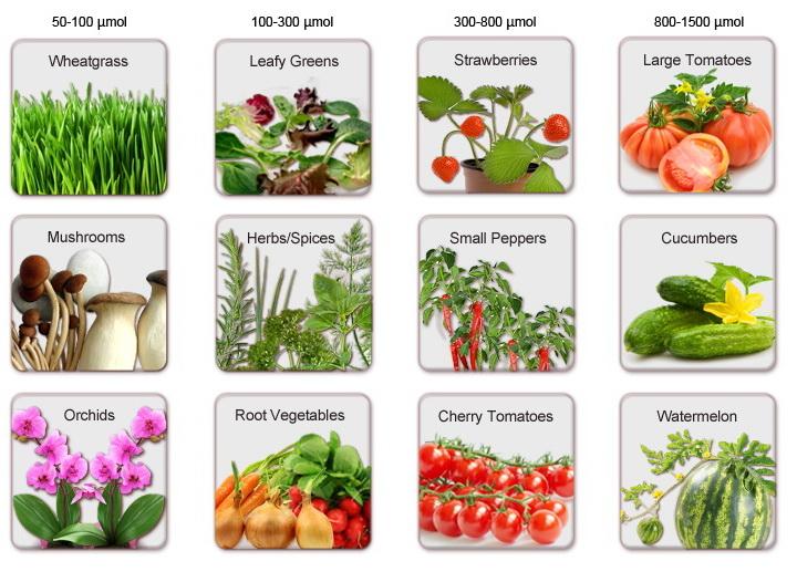 PAR для разных растений и овощей