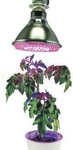 Лампы для рассады на подоконнике – фитолампа своими руками