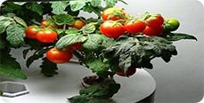 Способы выращивания растений