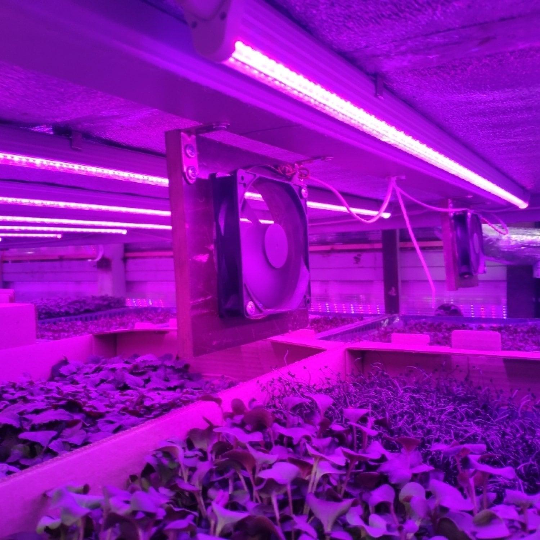 Фитолампа для растений линейная VA-3 60 см Фулл