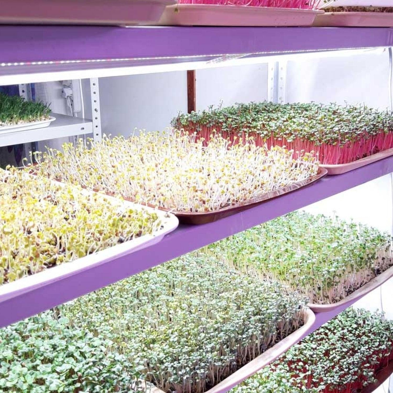 Фитолампа для растений линейная VA-3 90 см Биколор