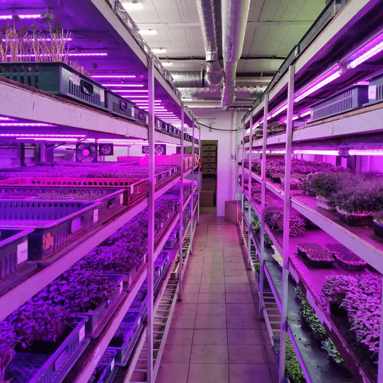 Фитолампа для растений линейная LN-1 60 см Sunlike