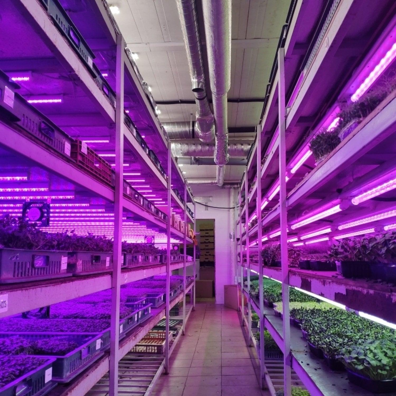 Фитолампа для растений линейная LN-1 60 см FS12 White full