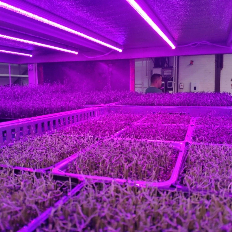 Фитолампа для растений линейная LN-1 120 см FS12 White full