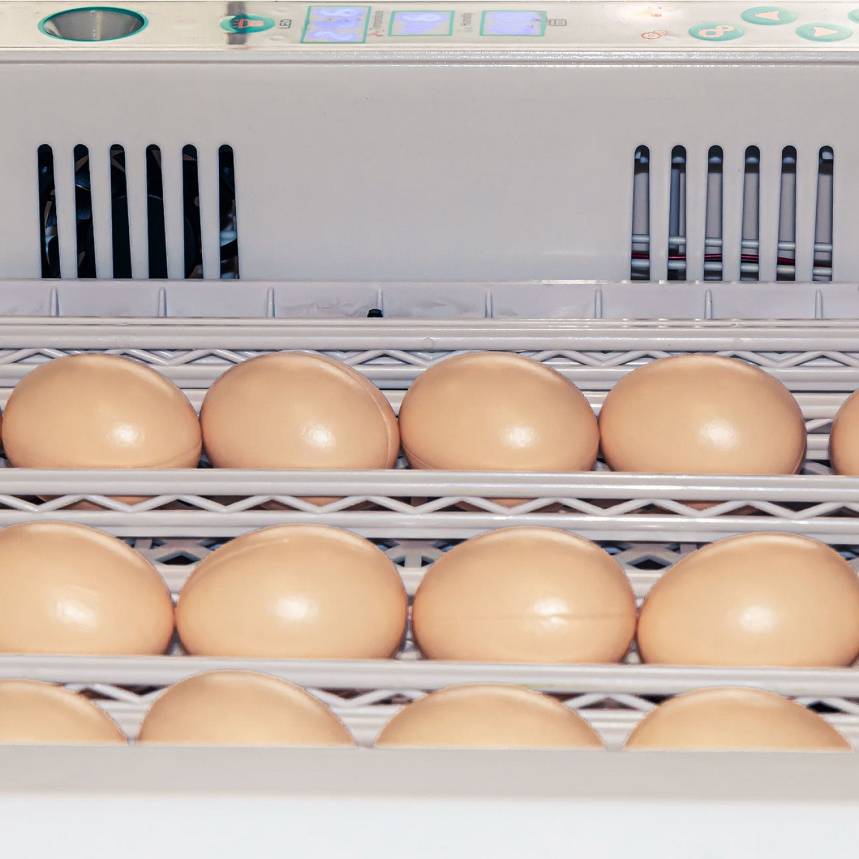 Инкубатор для яиц автоматический И-36_1