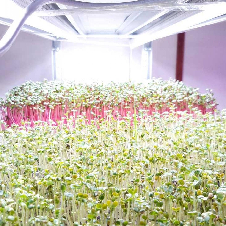 Фитолампа для растений линейная VA-3 60 см Фулл x3