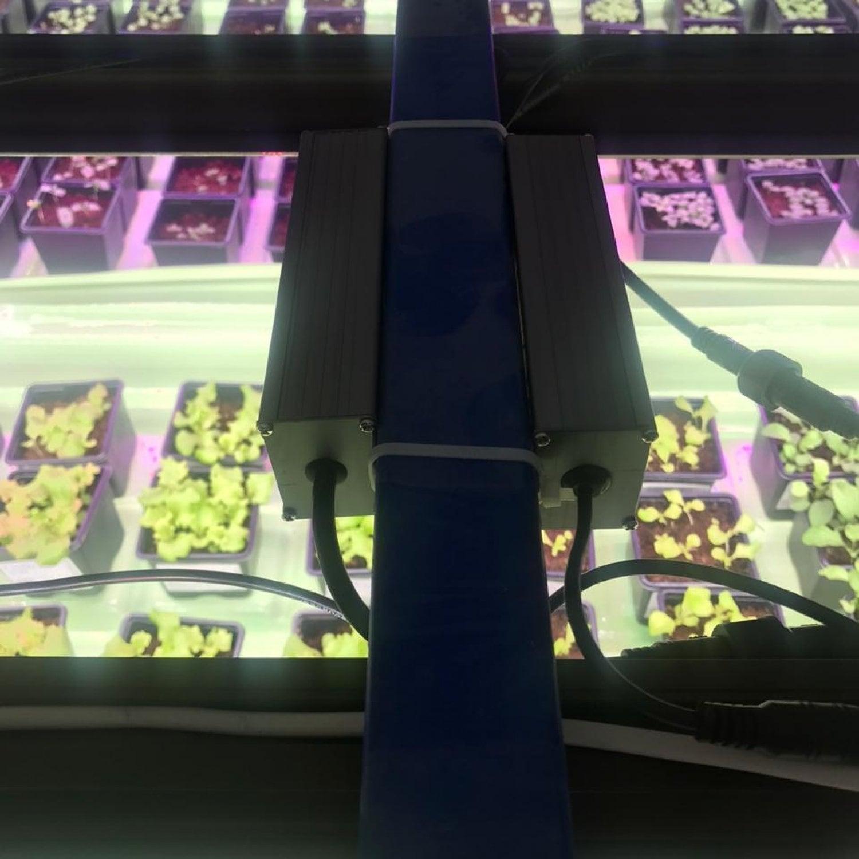 Цветонос 2.2.a 3000K + 660nm Quantum line 600 мм