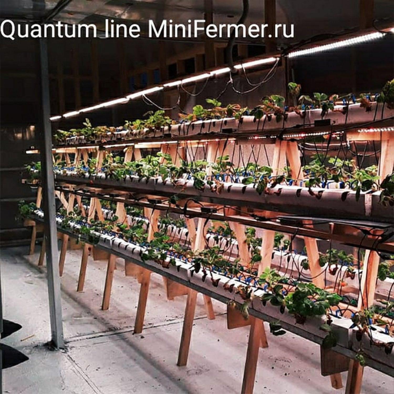 Двойной Quantum line  60 см 2шт в сборе 281b драйвер пластик