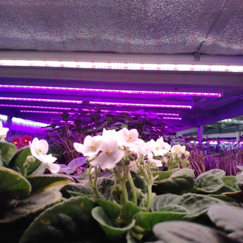 Фитолампа для растений линейная VA-3 120 см Samsung 5000К