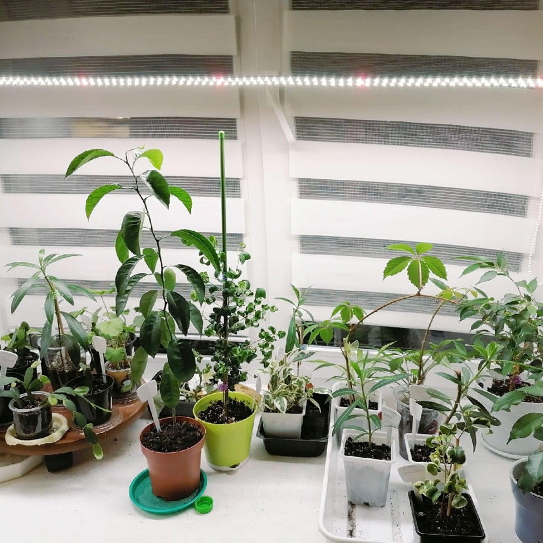 """Комплект """"Досветка растений на подоконнике 110 см"""""""