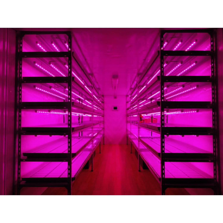 Фитолампа линейная для растений. Full spectrum SMD.Питание 24 Вольта.