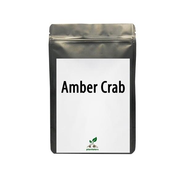 """Amber Crab"" 1 табл, 2 гр"