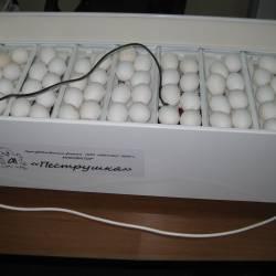 Инкубатор для яиц Пеструшка