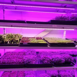 Фитолампа для растений линейная LN-1 90 см(Спектр на выбор - Биколор,Цветонос,FS12 White full)