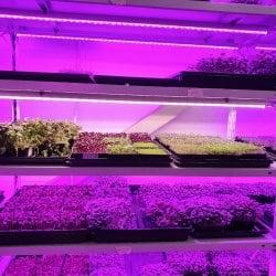 Фитолампа для растений линейная LN-1 120 см(Спектр на выбор - Биколор, Цветонос, FS12 White full)