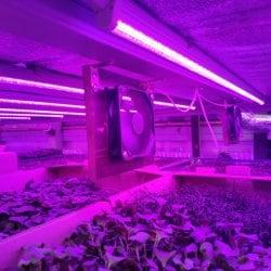 Фитолампа для растений линейная VA-3 60 см Биколор