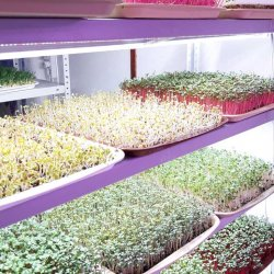 Фитолампа для растений линейная LN-1 60 см Биколор