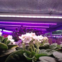 Фитолампа для растений линейная LN-1 120 см Биколор