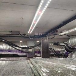 Биколор 2.3.c 660nm+450nm(3:1) Quantum line 900 мм